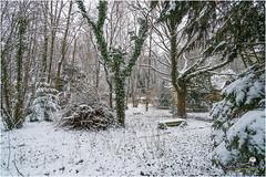 """Jardin sous la neige """"2018"""" (Christian Labeaune) Tags: 2018 jardin paysages christianlabeaune châtillonnais aujardin neige chatillonsurseine21400 bourgognefranchecomté france"""