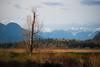 Will I Survive? (briantolin) Tags: mapleridge britishcolumbia dyke river creek stream water landscape path nature