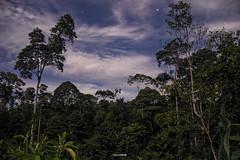 Selva (Danny Arte) Tags: dannyarte largaexposicion selva jungle tena ecuador finca estrellas nocturno nikon