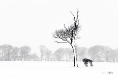 """""""This Way"""" (TrotterFechan) Tags: snow tree trees bush blackwhite"""