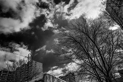 2018.03.16_075/365 - Cloudy & Sunny (Taema) Tags: bw bwphd2018 blackandwhite sky clouds tree moscow russia