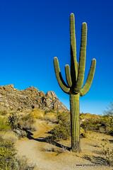 Saguaro and boulders (doveoggi) Tags: 0734 arizona scottsdale mcdowellsonoranpreserve desert saguaro cactus boulders
