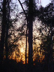 Sunset Behind The Trees. (dccradio) Tags: lumberton nc northcarolina robesoncounty outdoors outside nature natural sony cybershot dscw230 thursday thursdayafternoon afternoon plant sunset evening lateafternoon sky tree trees branch branches treebranches treelimbs