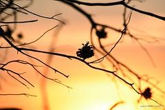 'I got a Nikon camera I love to take a photograph So mama don't take my Kodachrome away' (Toto Olmos) Tags: murcia sunset pinatar parque atardecer kodachrome kodak nature sun nikon d7200 tanrom