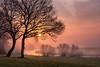 Easter Sunrise (Christian Wilmes) Tags: sonnenaufgang sunrise sonne sun nebel mist misty trees bäume baum fluss emsland river riverside sky himmel atmosphere wiese gras grass meadow fog foggy