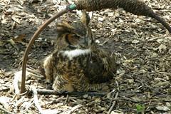 Grants Farm (Tiger_Jack) Tags: grantsfarm stlouis bird birds