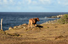 Snapshots of different moods of nature: On the way back to our resort, Maui, Hawaii. (biswarupsarkar72) Tags: hawaii pacificocean pacificislands pacificseabeaches maui usa tourisminusa travellinginusa sea seabeaches wailea grandwailea nikon nikond7000 samsung samsungmobilephotography samsungmobileon7pictures nikonphotography islandsinpacificocean passionoftravellinginusa photojournalism biswarupsarkar biswarupsphotography biswarupsphotographicjourney islandsofhawaii toursinhawaii tourisminhawaii charmsofhawaii natureofhawaii travellinginhawaii experienceinhawaii pacific pacificbeauty enchantinghawaii