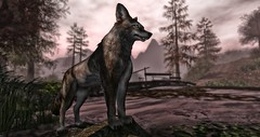 """""""Humans seem to have an innate drive to master other creatures."""" (Roy Mildor - I am how I am !) Tags: roymildor devin devin1 devin2 sim destination sl secondlife wald forest wolf lake see nature"""