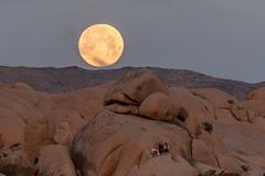Moonset (luke.me.up) Tags: california d850 joshuatree nikon roadtrip moon fullmoon moonset