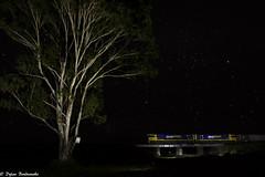The big tree (Dylan B`) Tags: qr qld queensland nsw pn pacific national brisbane sydney 3bs5 tamrookum rathdowney beaudesert night train locomotive stars tree bridge freight container cargo railway railroad diesel nr class dark
