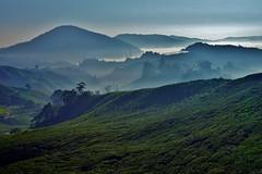Cameron Higlands - Boh Tea Plantation 10 (luco*) Tags: malaisie malaysia cameron highlands boh tea plantation thé matin morning montagnes montagne hills collines flickraward flickraward5