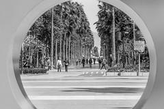 Almería (CrisGlezForte) Tags: almería la rambla pasear palmeras