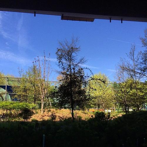 #springtime @quaibranly
