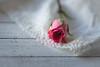 So Sweet (Captured Heart) Tags: rose singlerose rosebud sentimental sweetness lace
