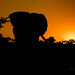 Sunrise in Greater Krueger