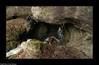 Entrée du Gouffre de Jérusalem - Deservillers (francky25) Tags: entrée du gouffre de jérusalem deservillers karst verneau réseau franchecomté doubs