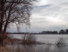 Baumberg - Rhein (KL57Foto) Tags: 2018 baumberg fluss germany gewässer jahreszeitenundwetter kl57foto landschaften march monheimbaumberg märz nrw natur nordrheinwestfalen olympus penemp2 rhein rhine river winter