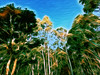 JEgidio 190318 (♣Cleide@.♣) Tags: © ♣cleide♣ brazil 2018 ps6 photo art digital painting texture filters artdigital exotic netartii atree sotn