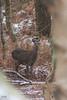 DSC_0807 (Cissa Rego) Tags: dorset snow winter landscape landscapephotography landscapephotographer snowylandscape westlulwort lulworth durdledoor isleofpurbeck purbeck purbecks manowarbay stoswaldsbay corfe corfecastle arne rspbarne deer nikon nikonphotography