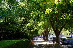 20180323-02-Green leafy St Kilda Road (Roger T Wong) Tags: 2018 australia melbourne rogertwong sel2470z sony2470 sonya7ii sonyalpha7ii sonyfe2470mmf4zaosscarlzeissvariotessart sonyilce7m2 stkilda stkildaroad victoria green leafy trees