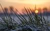 Sunrise on a cold day (Wouter de Bruijn) Tags: fujifilm xt2 fujinonxf56mmf12r sunrise dawn morning cold dew forst frozen winter white water grass nature landscape walcheren zeeland nederland netherlands holland dutch outdoor bokeh depthoffield