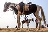 @Chennai (Raja. S) Tags: chennai tamilnadu marinabeach rajasubramaniyanphotography rajasubramaniyan horses
