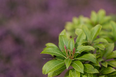 Das besondere Bokeh (Klaus Fritsche) Tags: blumenundpflanzen essen gruga helios