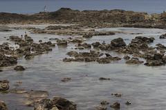 Low Tide Reef (fantommst) Tags: lisaridings fantommst shark cove low tide oahu hawaii pupukea beach snorkeling sea ocean us usa hi rocky volcanic reef aquatic northshore