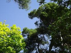 Parque Abelardo Sánchez (Albacete) (MarisaTárraga) Tags: españa spain albacete parque park abelardosanchez fujifilmsl300 arbol tree cielo heaven naturaleza nature