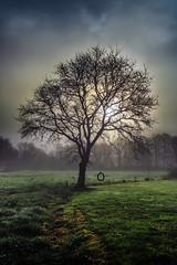 Arbore con bambam en Luou (Leon F. Cabeiro) Tags: sony a7r a7rii fe 24105 oss luou teo galiza galicia sunrise mencer neboa fog carballo oak roble