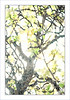 Under the Springtime Canopy of an Apple Tree. (Mikec77) Tags: arty watercolour