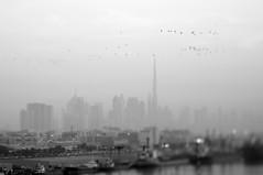 Dubai Skyline (Frau Koriander) Tags: dubai vae uae vereinigtearabischeemirate emirates الإماراتالعربيةالمتحدة arabien orient arabia unitedarabemirates westernasia asia asien persiangulf persischergolf cityscape city dubayy skyline animals vögel birds flying dreamy monochrome lensbaby lensbabycomposerpro lensbabycomposerproedge80 lensbabyedge80 edge80 blur blurry 80mm tilt tiltshift burjkhalifa msc mscsplendida megacity dubaicity metropole skyscraper hochhäuser sky view blick portrashid panorama stadt vogel bird flugformation romantic buildings architecture architektur urban port harbour hafen diesig weather hazy misty dunst mist haze myth