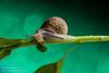 _JRB1834 (yossi rufman) Tags: snails macro d750 nikon tokina 100mm yossi rufman
