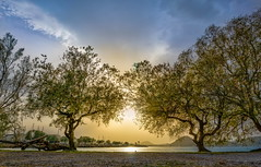 Daydreaming (HDR) (panos_adgr) Tags: sony a6000 daydreaming landscape sea trees sun clouds sky earth hdr