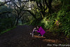 Leona Height Park, Oakland (katiewong511) Tags: leona height park oakland spring nature california forest trees backlighting fern long longexposure creek redwood moss mushroom