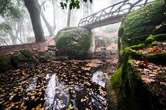 (fernando_gm) Tags: braga portugal europe europa fujifilm fuji 1024mm xt1 landscape agua water reflection reflejo reflejos nature naturaleza otoño autumn niebla fog airelibre