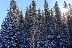 IMG_0568.jpg (Harmon Caldwell) Tags: canon 6d 40 mm pancake winter park resort colorado snow trees landscape