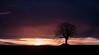 SEUL (nicolastelle) Tags: arbre lever du jour nature noir soleil pose longue