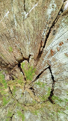 20170406_174219 [ps] - Straight to the Heart (Anyhoo) Tags: anyhoo photobyanyhoo uk england guildford surrey stmarthashill stmarthas wooden timber tree trunk log splitting cracked split wood algae lichen