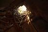 arbre reprend sur la pierre (Joh Pik) Tags: preahvihear prasatpreahvihear unesco patrimoinemondial patrimoinemondialedelunesco worldheritage thailande cambodge cambodia thai frontière frontier temple ប្រាសាទព្រះវិហារ prasatpreahvihea shiva bouddha buddha shivaïste templedepreahvihear asie culturel cultural templehindou hindutemple dângrêkmountains khmer empirekhmer unescoworldheritagesite suryavarman montsdangrek architecturekhmère