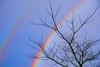 Double rainbow ;) (LichardPictures) Tags: arcenciel arbre paysage arcencieldouble pluie ciel