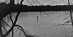 IMG_0327 (www.ilkkajukarainen.fi) Tags: blackandwhite mustavalkoinen monochrome winter talvi ice jää suomi suomi100 eu europa skating luistelu retki outdoor bodom lake järvi finland finlande travel traveling visit happy life sport urheilu forest metsä threes puut