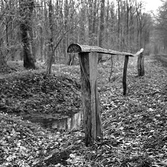 superikonta532005 (salparadise666) Tags: zeiss ikon super ikonta 53216 opton tessar 80mm fuji neopan acros vintage folding medium format analogue film camera nils volkmer 6x6 square bw black white monochrome landscape nature rural trees hannover region niedersachsen germany north german plains lowlands
