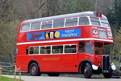 RT8 FXT183 (PD3.) Tags: rt8 rt 8 fxt183 fxt 183 aec regent ensign surrey museum brooklands lbpt cobham annual bus buses coach spring gathering preserved vintage preservation trust 2018 london transport weybridge