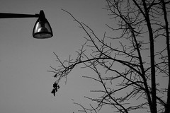 branches in black&white (EllaH52) Tags: streetlight lamppost tree branches twigs leaves blackwhite monochrome