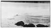 Eider (Eline Lyng) Tags: seascape nature sea coastline norway larkollen eider leica m m240 leicam240 rangefinder leicalens manual focus aposummicron 75mm aposummicron75mmf2 monochrome monochrom blackandwhite bw dof animal bird