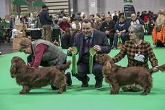 GAZ_1327 (garethdelhoy) Tags: dog sussex spaniel crufts 2018 kennel club