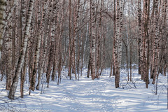 2018-03-19-08-41-56-7D2_4008 (tsup_tuck) Tags: 2018 march moscow spring woods