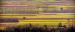 Agricultural Lines (andbog) Tags: sony alpha ilce a6000 sonya6000 emount mirrorless csc sonya oss sel nature natura widescreen landscape paesaggio panorama layers sonyα sonyalpha canavese to piedmont piemonte candia countryside campagna overlook italia italy morning it sony⍺6000 sonyilce6000 sonyalpha6000 ⍺6000 ilce6000 apsc field campo country winter inverno 55210mm sel55210 21x9 219