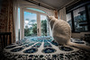 King of all he surveys (Melissa Maples) Tags: adrasan turkey türkiye asia 土耳其 亚洲 nikon d3300 ニコン 尼康 sigma hsm 1020mm f456 1020mmf456 msoadrasan abra animal kitty cat whitecat table